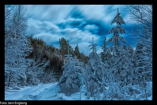 Winter forest | by jorn.engberg