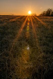 Sunset Field -3