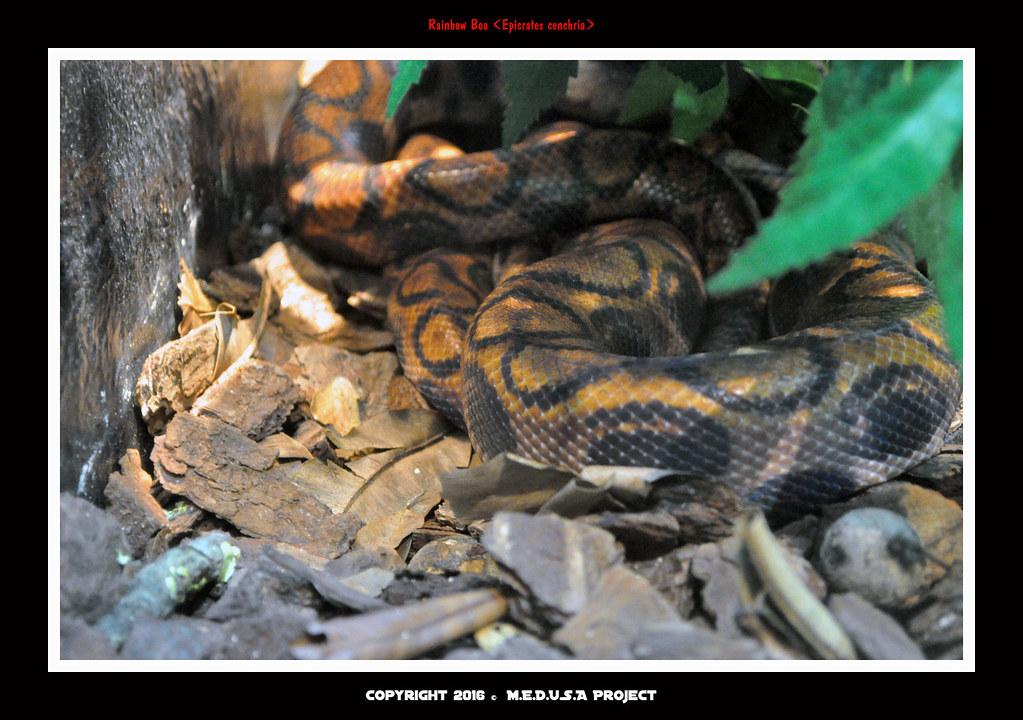CNY Bonanza Mandai Zoo 44