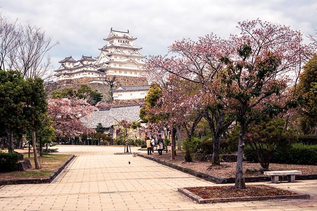 Himeji Castle (姫路城 Himejijo) with Cherry Blossoms in Spring, in Himeji (姫路) Japan
