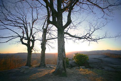 trees sunset sky landscape north scenic carolina