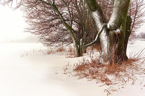 trees winter white snow tree field landscape farm 100v10f jordan onwhite jamesjordan fivestarsgallery abigfave 30faves30comments300views impressedbeauty potwkkc27
