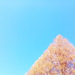 冬空 スカイブルー   綺麗な色   木が綺麗な三角でした   #三角 #スカイブルー #skyblue #木 #tree #冬空
