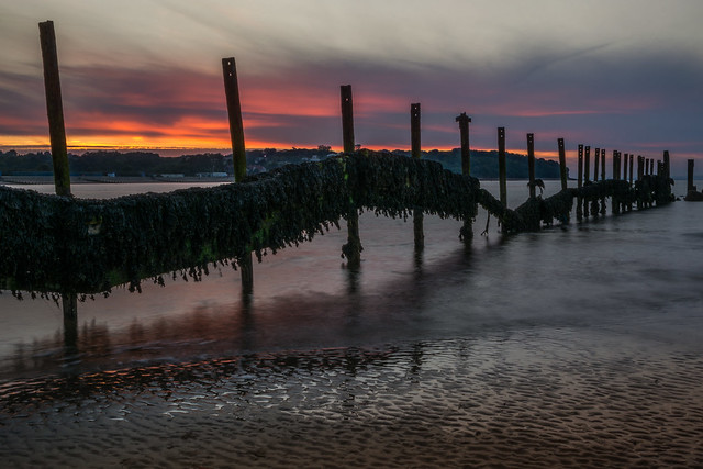 Seaweed and Sunset