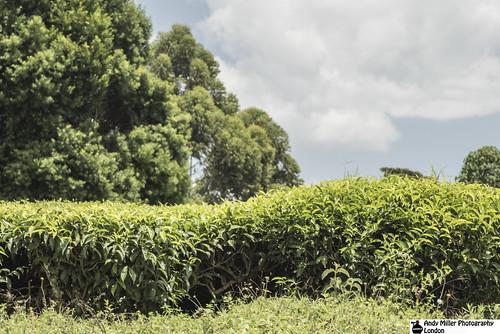 africansafari nikonwildlife ajm057 masaimaranationalreservekenya