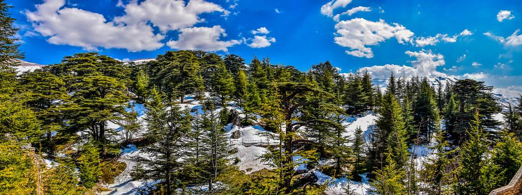 The Cedars Of God, Lebanon