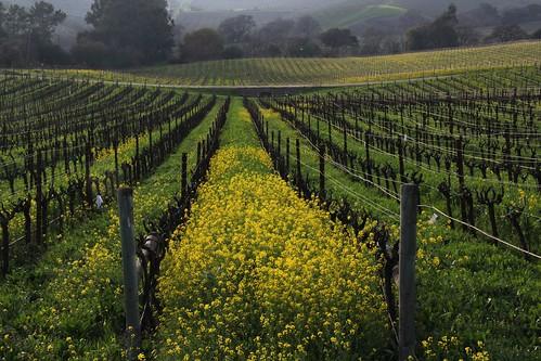 northerncalifornia vineyard napacounty loscarnerosava