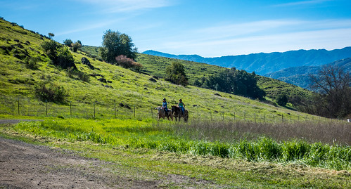 california park ca morning blue trees sky horse plant mountains green grass clouds fence us unitedstates outdoor sanjose trail santacruzmountains horseriding santateresacountypark santaclaracountyparks