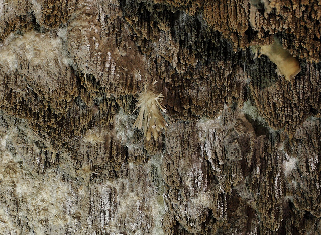 Spanish Moss Cave