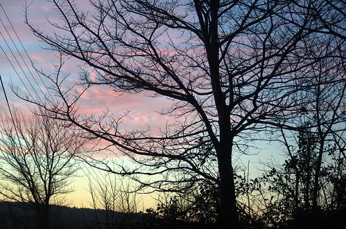 sky tree silhouette sunrise