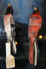 detail of dead birds in STRIKE art installation