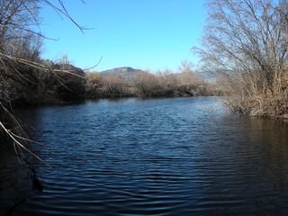 oliver-lions-park-wetland-1