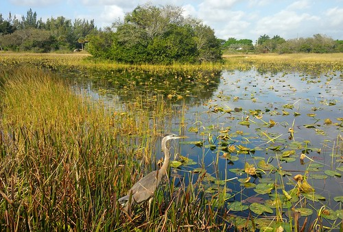 park bird heron nature marsh freshwater ardeidae treetopspark