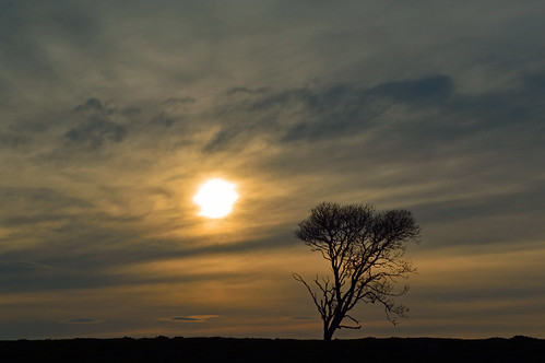 sunsetbaldersdale sunset tree lonetree sky outdoor serene balderhead balderheaddam baldersdale englandlandscape landscape nikon nikond3200 countryside rural sun dusk