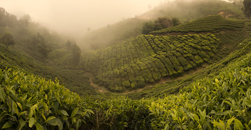 winter sunset india fog tea kerala hills munnar plantations