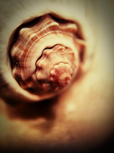 Seashell | by Thad Zajdowicz