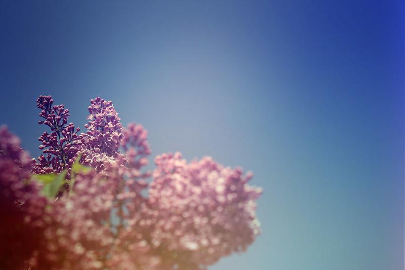 blur-dreamy-texture-texturepalace-30