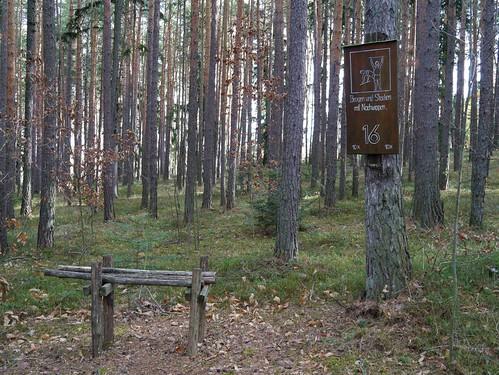 trees winter forest austria österreich board schild pines fitness wald bäume niederösterreich autriche penk föhren loweraustria buckligewelt zinswald gymnastikstation gymnasticstation