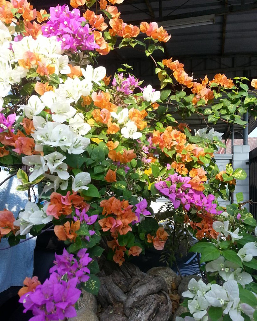 14 Gambar Bunga Kertas Warna Warni Galeri Bunga Hd