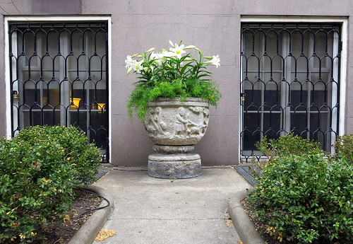 Easter lilies: West 10th Street, Greenwich Village, New York City | by Spencer Means