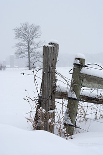Fenceposts | by Thankful!