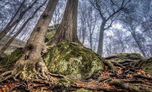 ohio fog foggy roots hinckley whippsledges clevelandmetropark