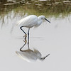 Reflection on an egret by andymulhearn