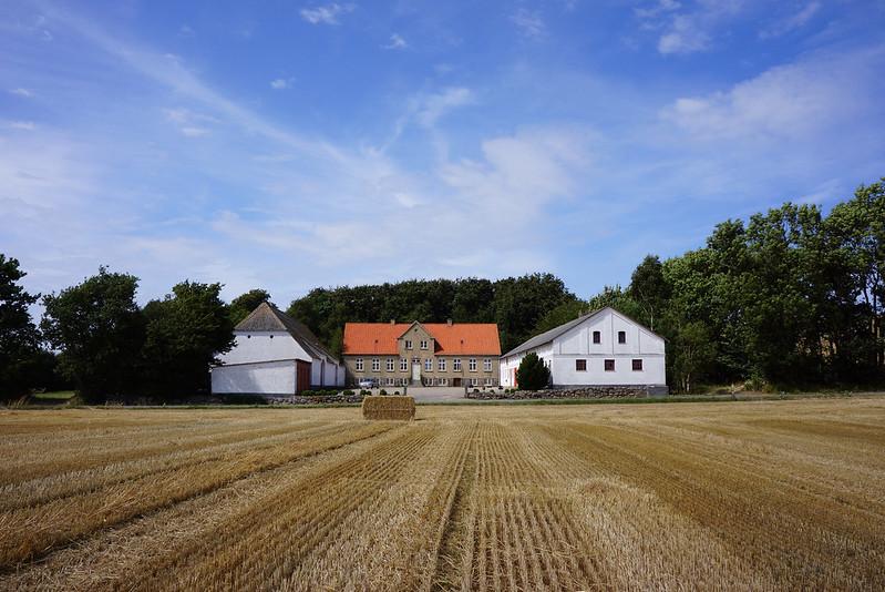 Tjoernbjerg-Marker-2014 (15)