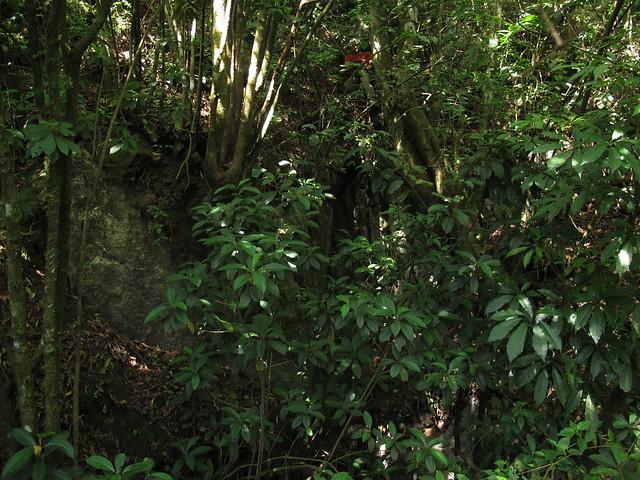 Proyecto Espeleológico Sistema Huautla 2016, Sinkhole Cave High Lead