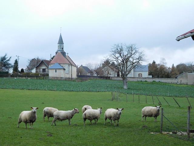 Seven sheeps