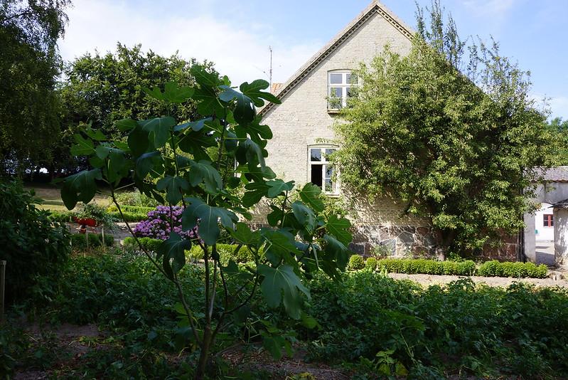 Tjoernbjerg-Have-2014-07-24 (4)