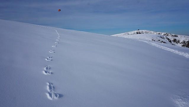 La trace  -  The track