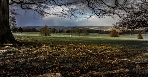 landscape pasture brettoncountrypark