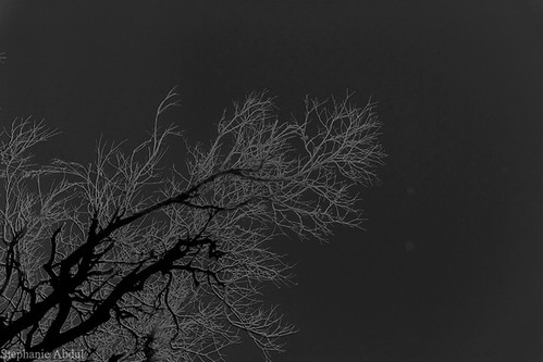 bridge sky white black tree monochrome birds fog louisiana cardinal branches finch infrared veins microscopic capillaries lungs breaux
