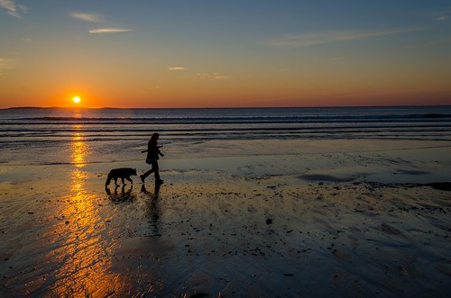 ocean morning dog sunlight beach water dawn photographer maine atlantic oldorchardbeach oob walkingthedog blindphotographer