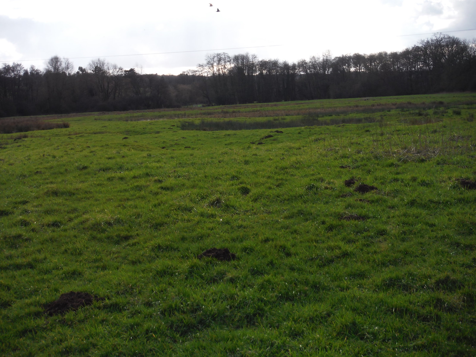 Meadows along the Pang, Stanford Dingely SWC Walk 117 Aldermaston to Woolhampton (via Stanford Dingley)