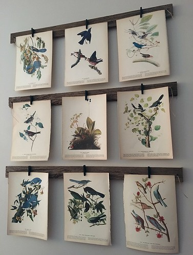 Bird Print Gallery Wall Project | by A Storybook Life