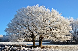 The love makes beautiful. frosted landscape for christmas xmas and happy new year pour noël et le nouvel an | by * Thierry *