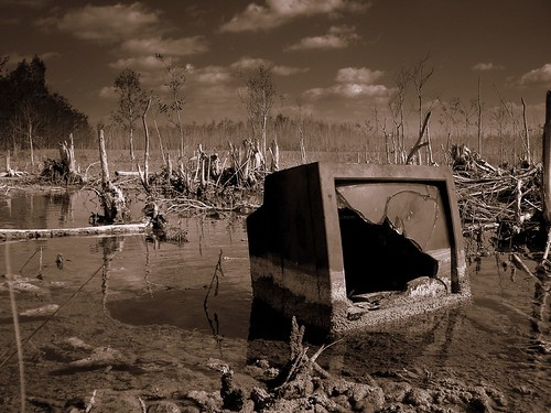 Swamp TV. | by James Good