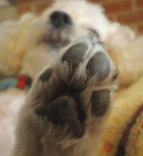 Amore's Paw