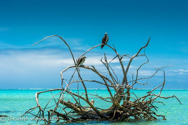 2016 New Caledonia-097