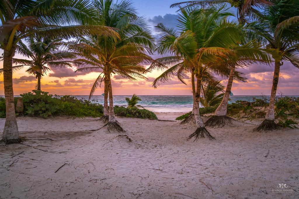 Sunrise, palms and beach in Tulum, Mexico