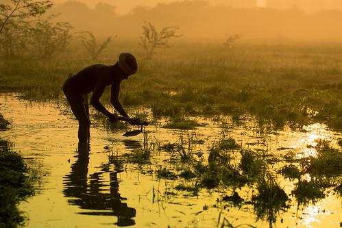 sun india reflection silhouette sunrise nikon paddy farming d750 fields agriculture nikkor chennai plough tamilnadu paddyfield cultivate தமிழ்நாடு nikon80200mmf28d thiruneermalai 80200mmf28dnew சென்னை farmeratwork திருநீர்மலை kanchipuramdistrict காஞ்சிபுரம்மாவட்டம்