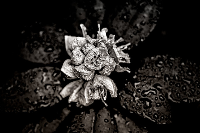 Infrared-styled blossom