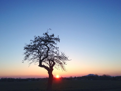 sunrise sunrisesunsetsaroundworld aeppelboom