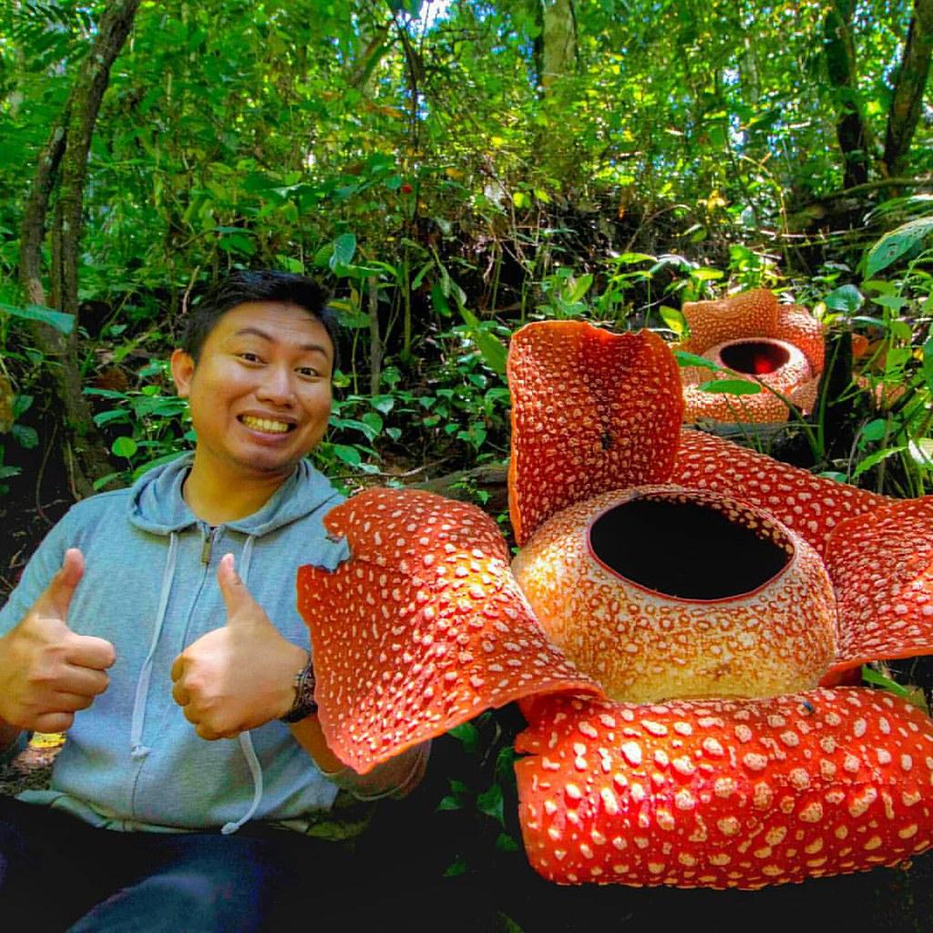 Unduh 7200 Koleksi Gambar Bunga Raflesia Terbesar Di Dunia Paling Cantik HD