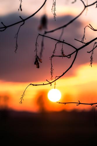 light sunset orange tree colors leaf fuji bokeh depthoffield fujifilm xe2s