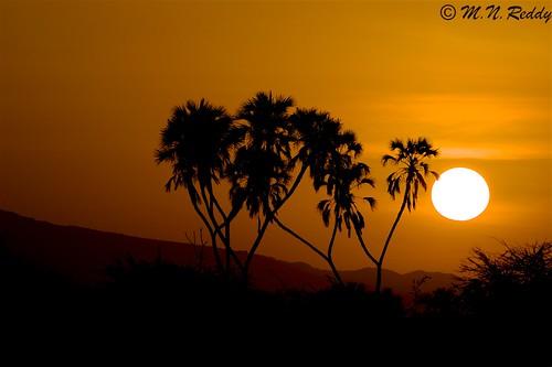 kenya samburunationalpark nikond4s sunrisingcolors