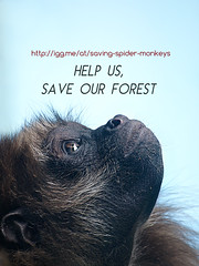 Help us save our forest