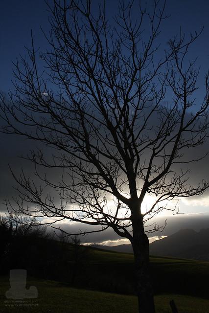 Black Tree HDR